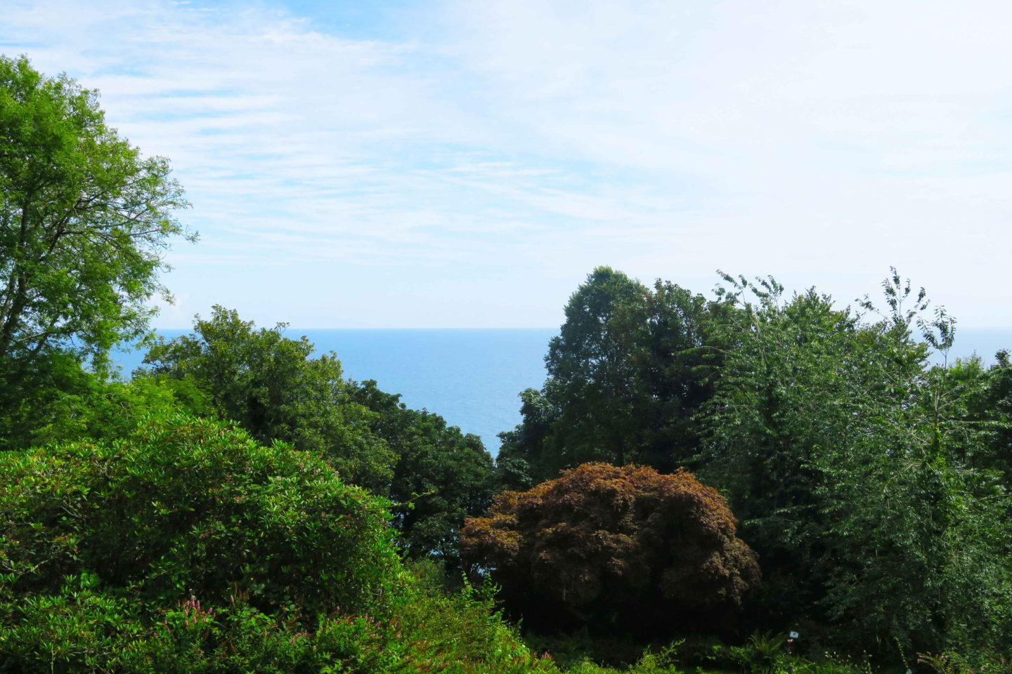 view of the sea from looe monkey sanctuary in cornwall