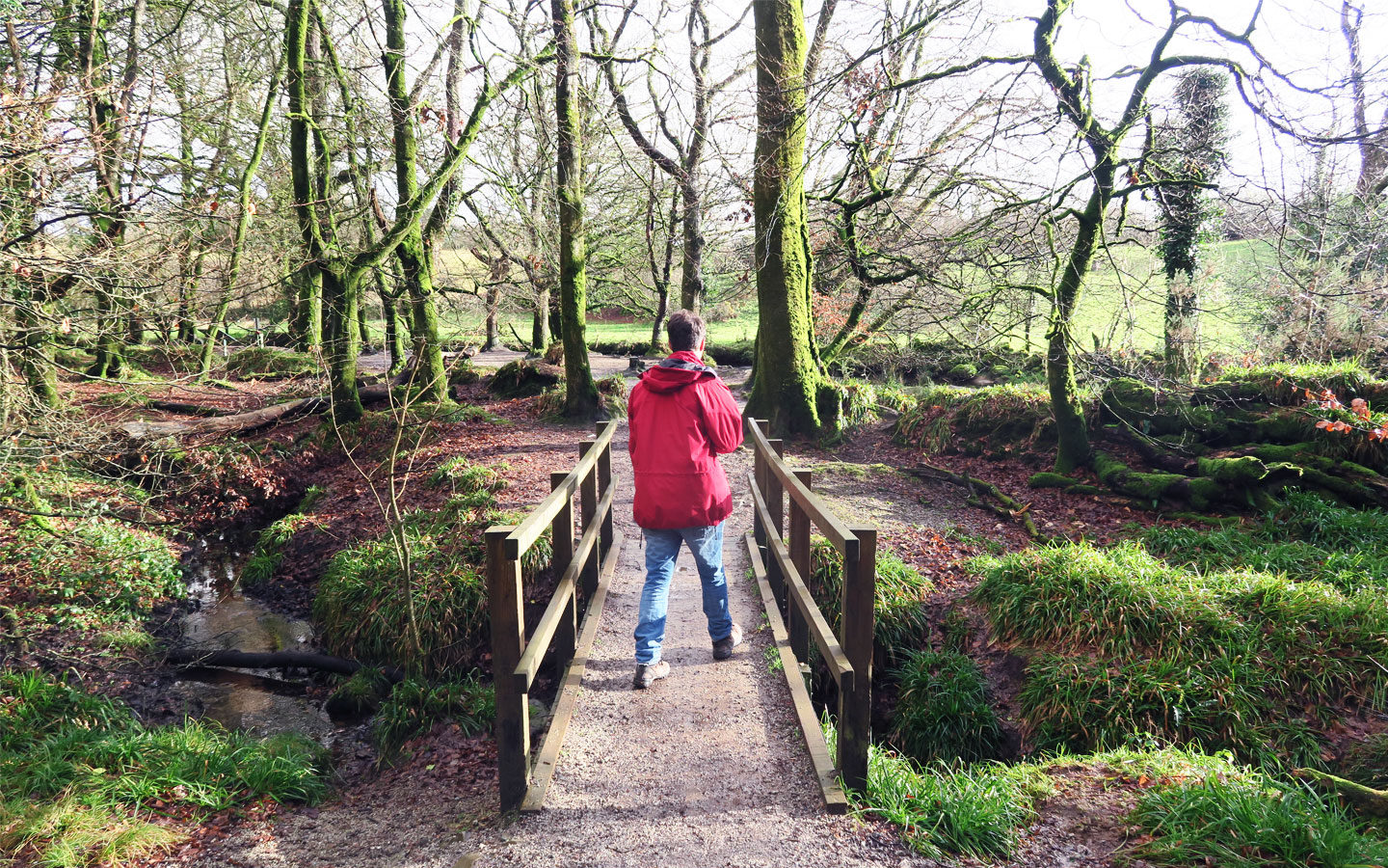 man in red coat walking over bridge in forest at golitha falls