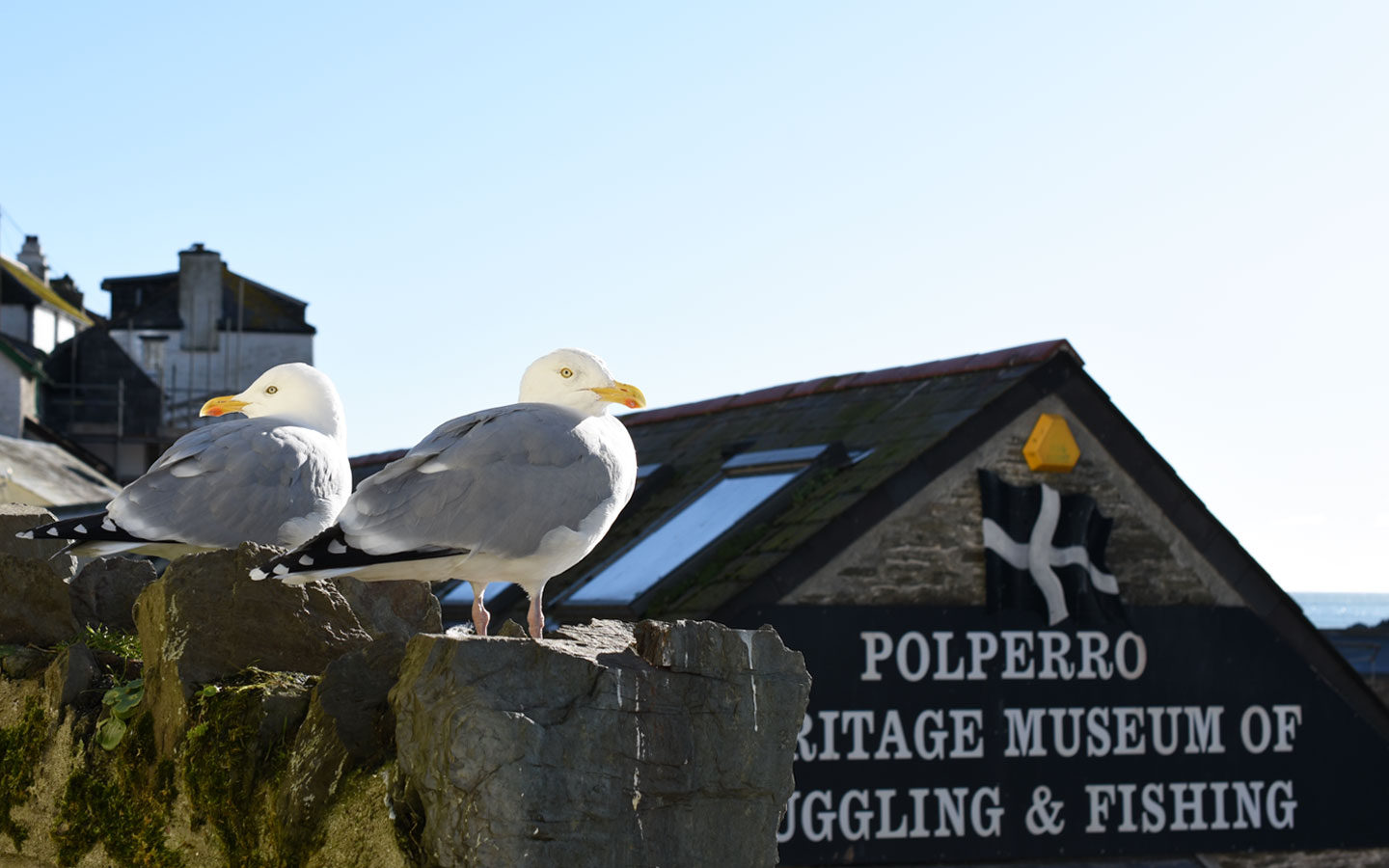 seagulls sat on wall in front of polperro vintage museum of lugging and fishing