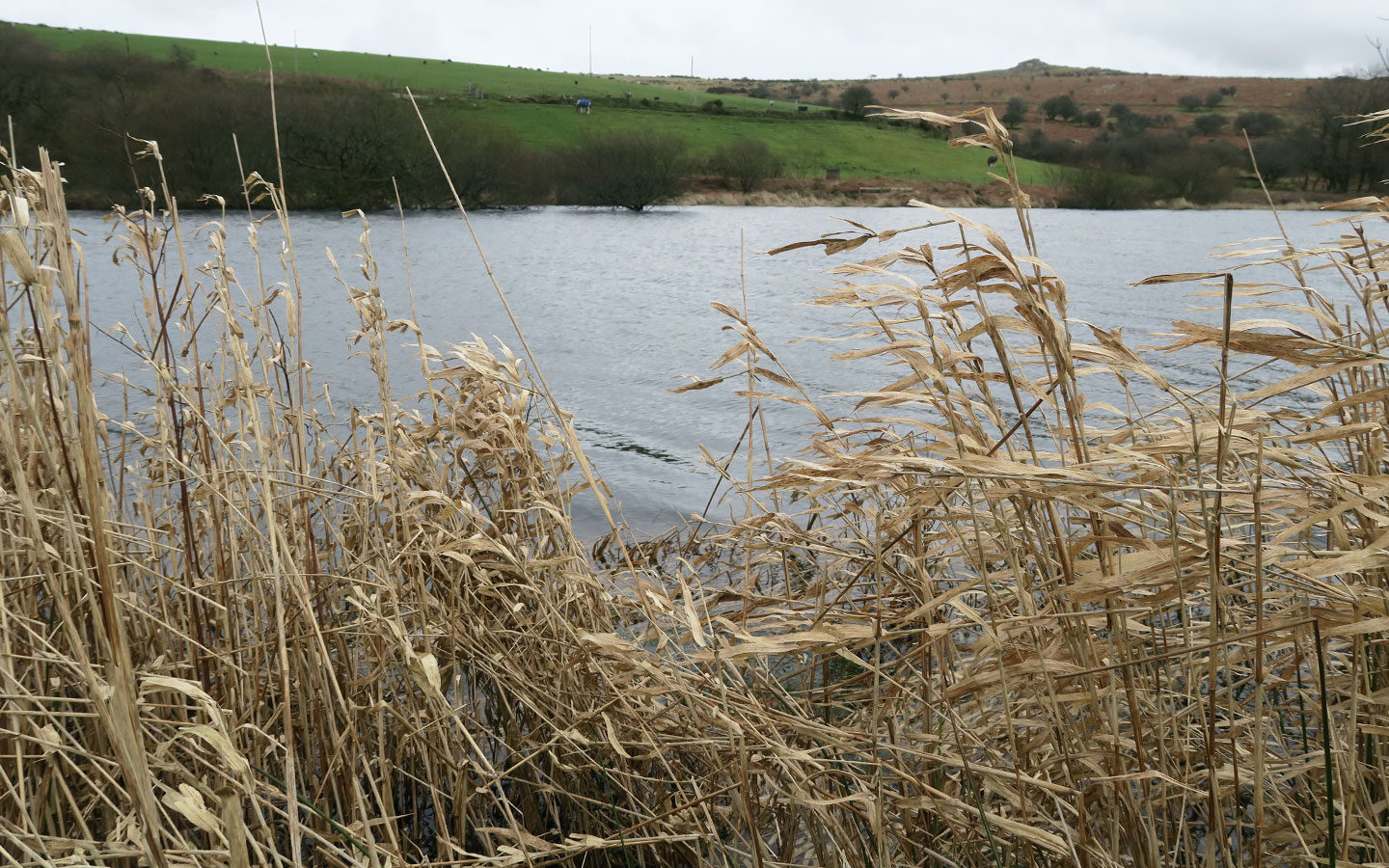 grass overlooking lake at siblyback lake in cornwall