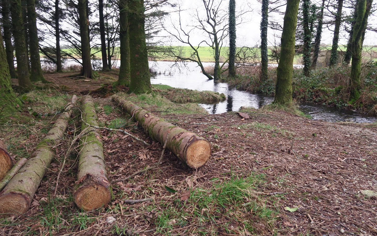 logs on floor at siblyback lake in cornwall