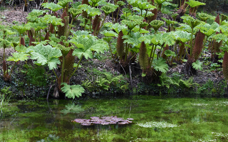 pond at glendurgan gardens in cornwall