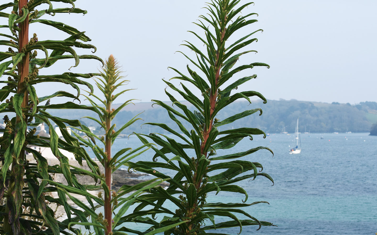 plants overlooking harbour at saint mawes in cornwall