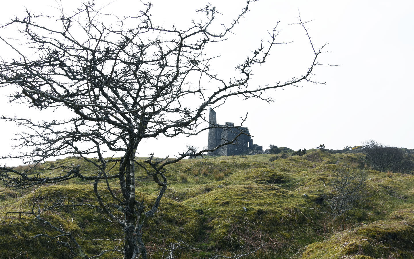thorny tree in front of old engine house on bodmin moor in cornwall