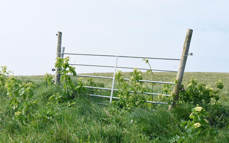 farm gate covered in plants in rosevine in cornwall